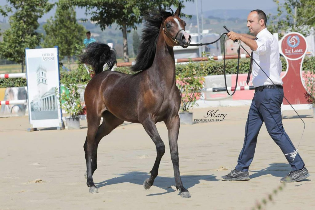 2016 Filly - Bronze Medal Montefalco 2017