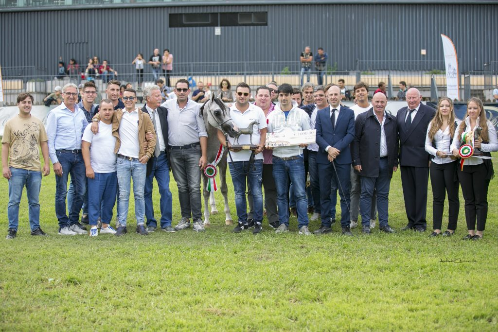 Silver Medal Yearling Colts Italian National Campionship Roma 2017