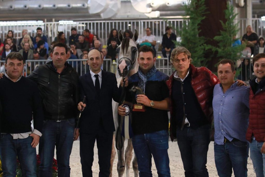 Gold Medal Yearling Colts Gran Premio Fiera Cavalli Verona